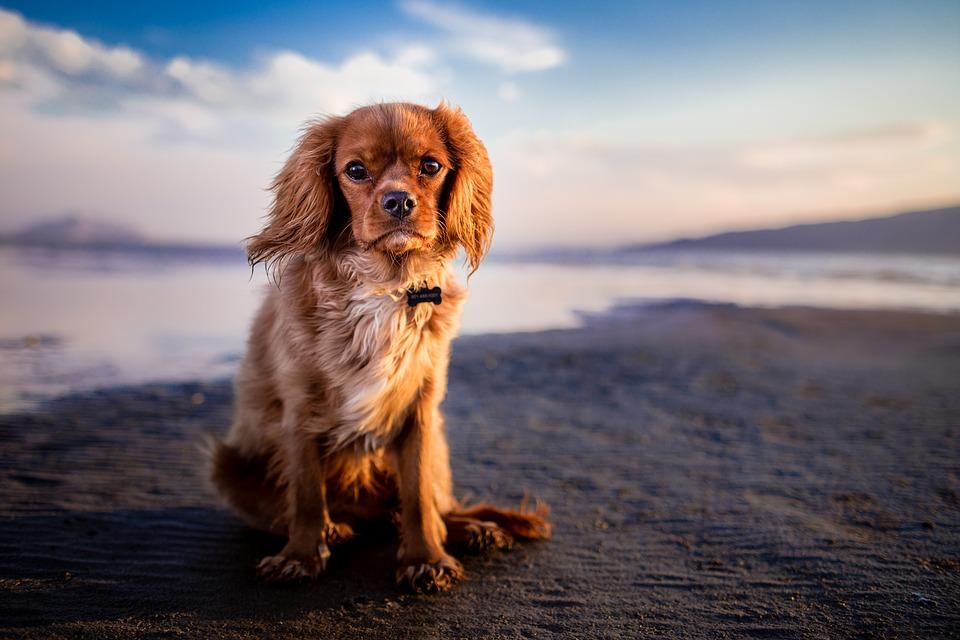 Chuvas aumentam risco de leptospirose canina