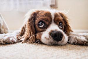 Como evitar que seu pet adoeça com a chegada do outono?