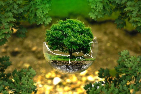 Legislação ambiental é tema do Café com Seguro, promovido pela ANSP