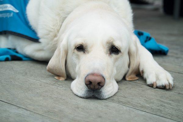 MSD Saúde Animal lança plataforma de conteúdo gratuito para veterinários