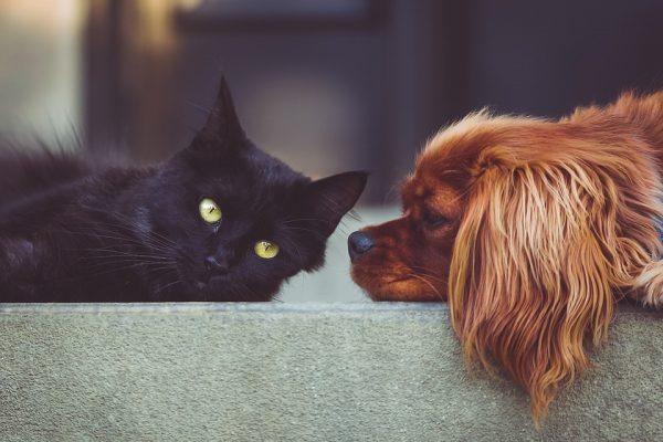 Entenda a importância de fazer o check-up periódico do seu pet