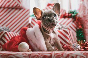 Rede de Convênios GBOEX oferece várias opções para celebrar o Natal
