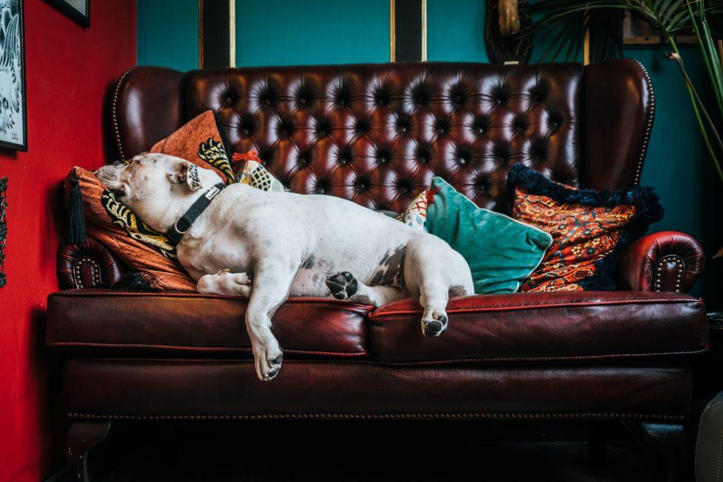 3 dicas para manter o sofá e colchão em bom estado