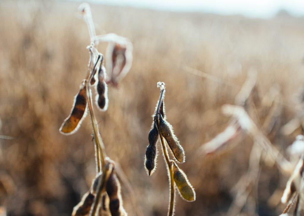 Fairfax lidera as contratações de apólices subvencionadas para soja