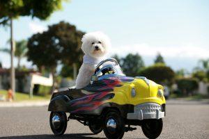 Dicas para viajar com os pets de carro / Divulgação
